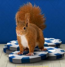 Suomiautomaatti kasino orava pelimerkkien päällä